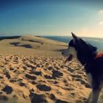 Eïko à la dune du Pyla