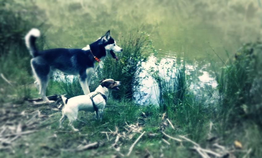 Devant le lac
