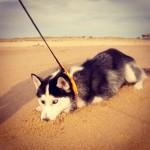 Eïko - Le nez dans le sable