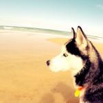 Eïko à l'océan