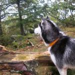 Eïko qui apprécie la nature...