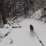 Footing final dans les bois