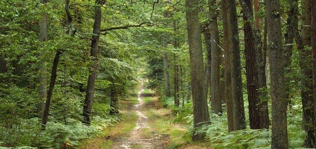 La forêt vide...