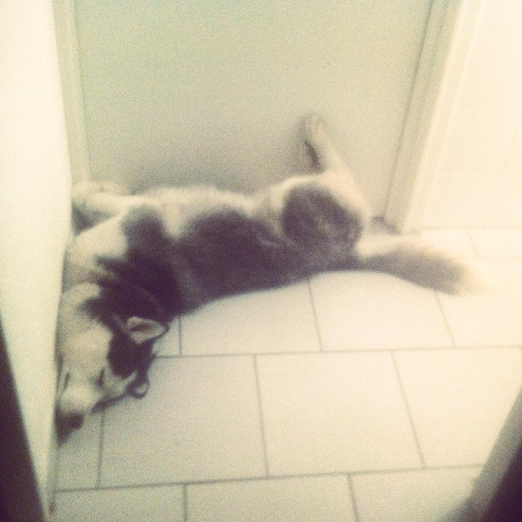 Eïko en train de dormir...